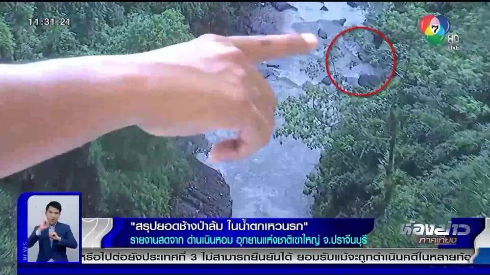 กรมอุทยานฯ สรุปยอดช้างป่าล้ม ในน้ำตกเหวนรก รวม 11 ตัวแล้ว