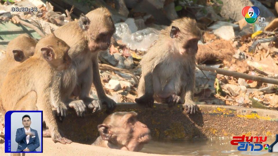 รายงานพิเศษ : คุมประชากรลิงแสม หวั่นล้นเขาตะเกียบ จ.ประจวบคีรีขันธ์