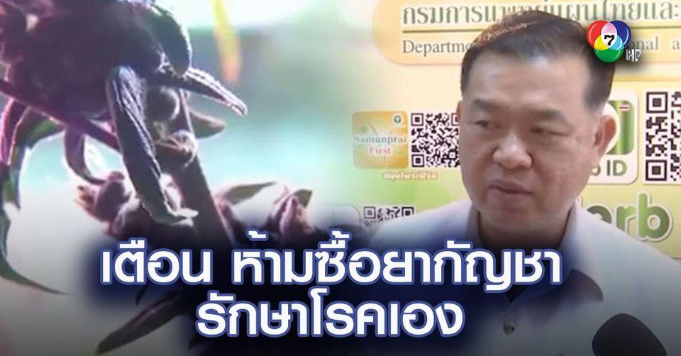 แพทย์แผนไทยเตือน ห้ามซื้อยากัญชารักษาโรคเอง ใช้ผิดเสี่ยงถึงชีวิต