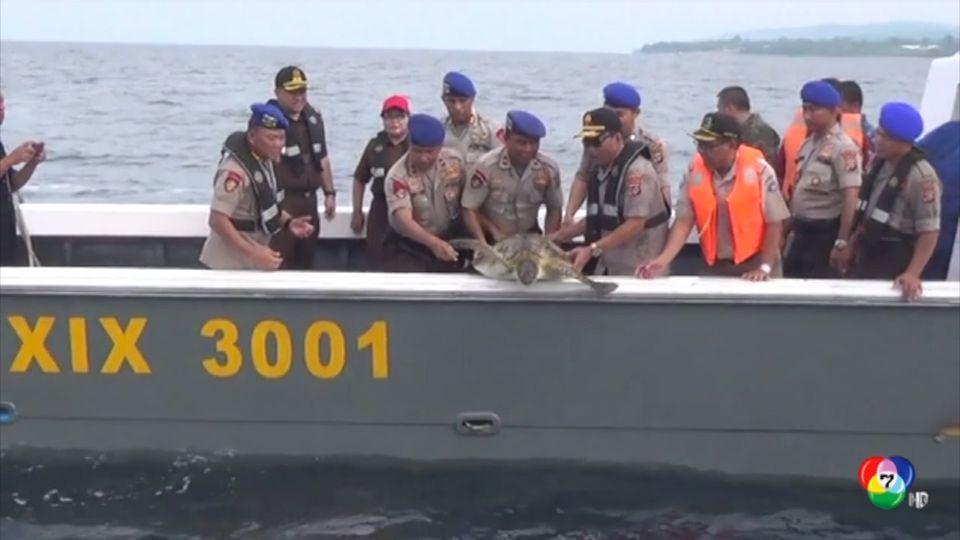 ปล่อยเต่าตนุถูกลักลอบนำเข้าบนเรือประมงอินโดนีเซีย