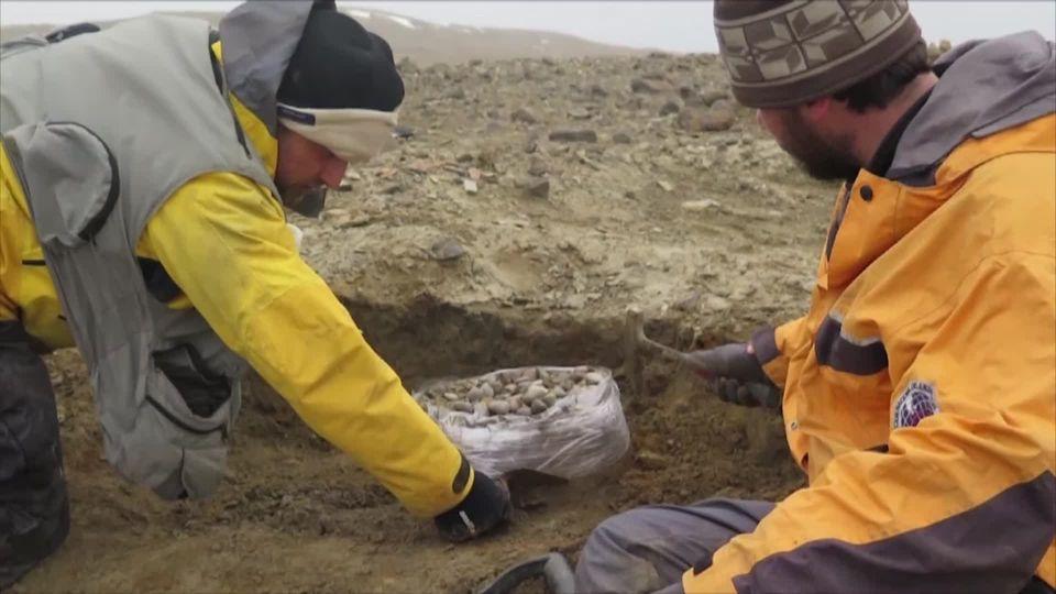 ทีมค้นหาอาร์เจนตินาพบชิ้นส่วนไดโนเสาร์คอยาว บนเกาะมารัมบิโอ