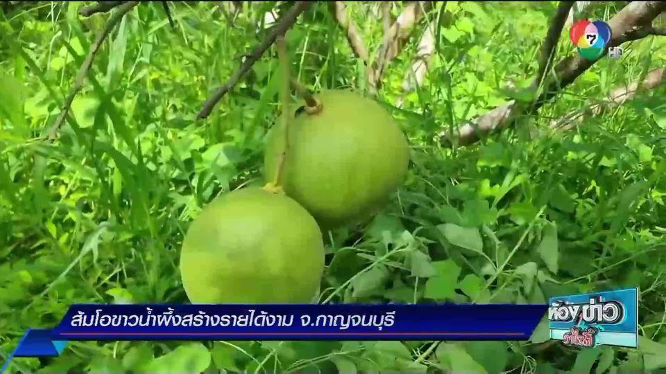ข่าวเกษตร : ส้มโอขาวน้ำผึ้งสร้างรายได้งาม