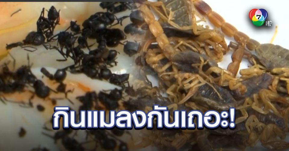 ของดีมีประโยชน์! ผู้เชี่ยวชาญเผยการกินแมลงดีต่อโลก-สุขภาพ
