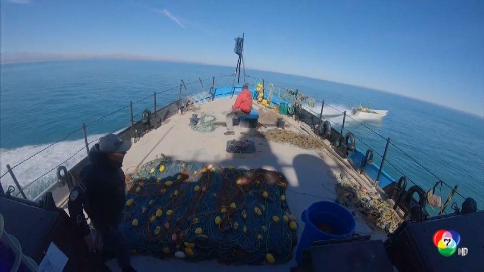 เรือนักอนุรักษ์ทะเลถูกโจมตีในเม็กซิโก