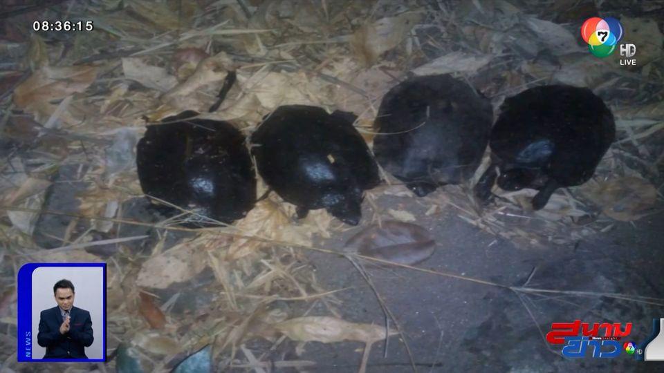 ภาพเป็นข่าว : เผยภาพสะเทือนใจ! ไฟป่าทำพิษ เต่าถูกเผาตายทั้งเป็นในกองเพลิง