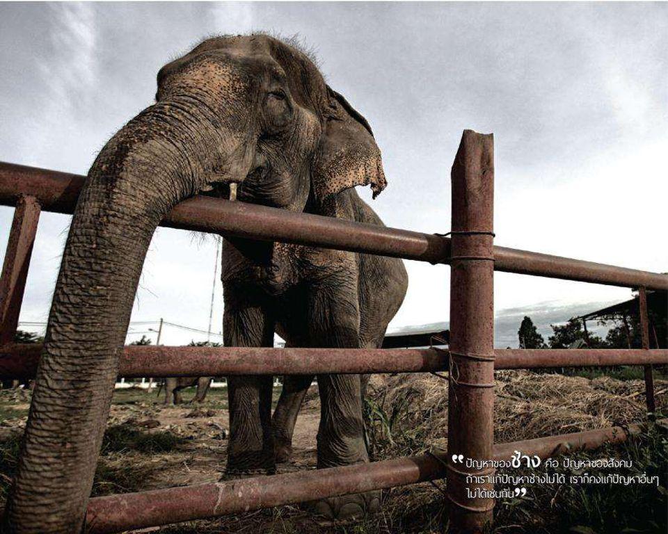 ช่อง 7 สี ส่ง ภาพยนตร์เชิงสารคดี ช้างไทย  ออกอากาศทุกวันเสาร์ เวลา 16.15 น.