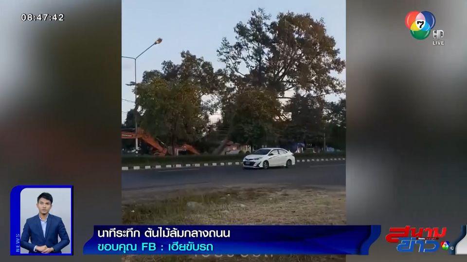 ภาพเป็นข่าว : นาทีระทึก! จนท.ล้มต้นไม้ แต่ไม่ปิดถนน หวิดทับรถเสียหาย