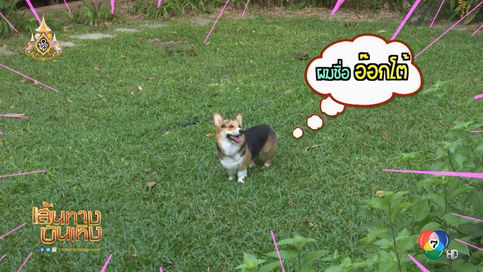 มิน พีชญา วิ่งไล่จับน้องหมา ในกองละคร สะใภ้อิมพอร์ต | เฮฮาหลังจอ