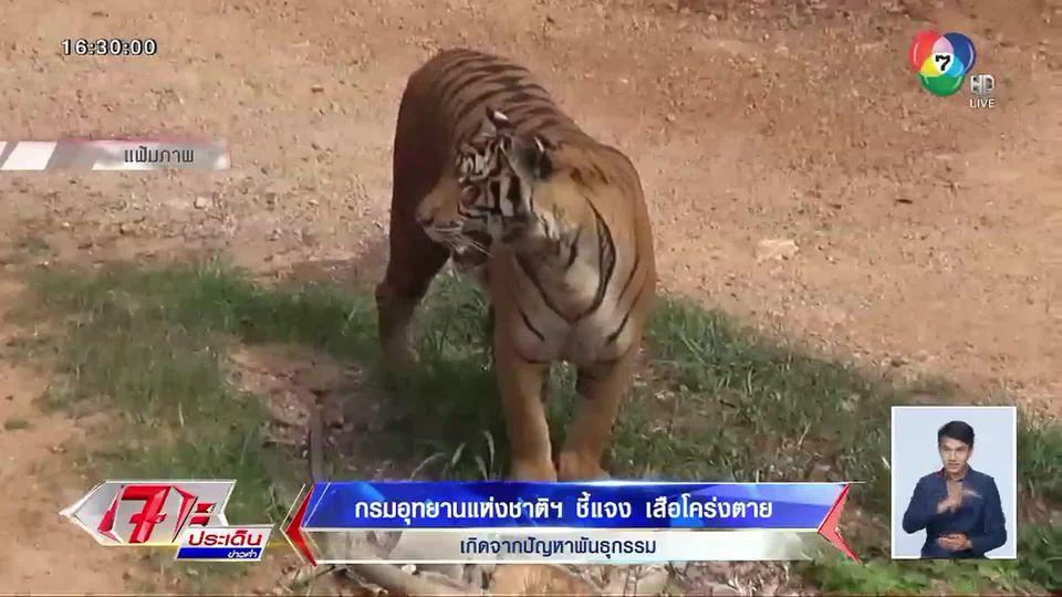 กรมอุทยานฯ แจงปมเสือโคร่งทยอยตาย พบติดเชื้อไข้หัดสุนัข-ปัญหาพันธุกรรม