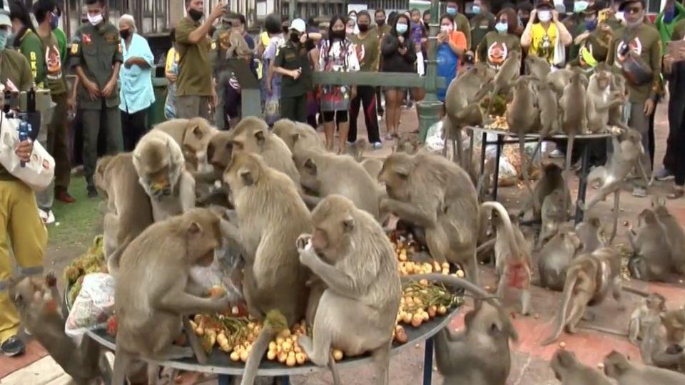 สีสันโต๊ะจีนผลไม้เลี้ยงฝูงลิงนับพันตัว เสิร์ฟทุเรียนนับร้อยลูก