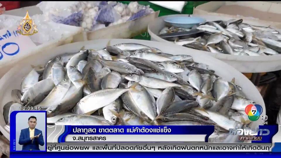 ปลาทูสดขาดตลาด แม่ค้าต้องขายปลาทูแช่แข็งนำเข้า เพราะปลาทูในอ่าวไทยลดลง