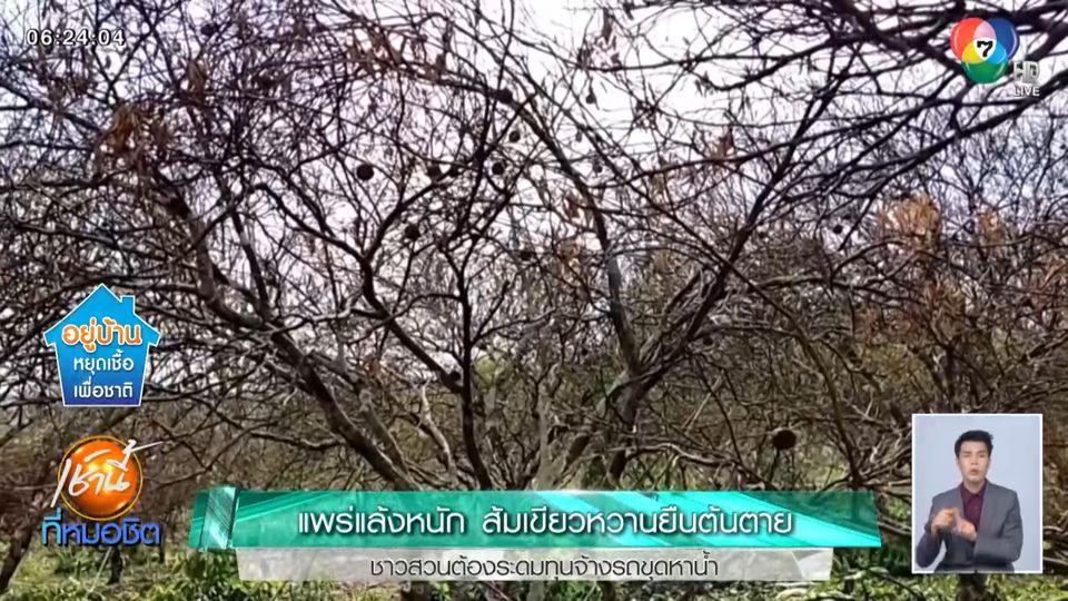 แพร่แล้งหนัก ส้มเขียวหวานยืนต้นตาย ชาวสวนต้องระดมทุนจ้างรถขุดหาน้ำ