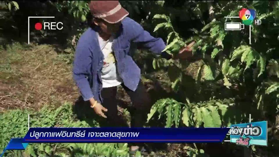 ข่าวเกษตร : ปลูกกาแฟอินทรีย์ เจาะตลาดสุขภาพ