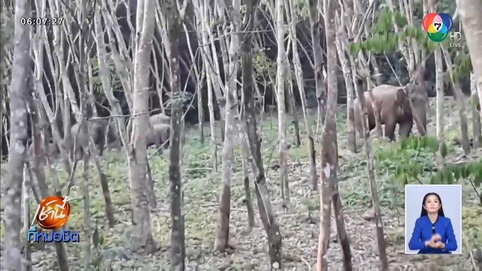 จัด จนท.เฝ้าระวังช้างป่าตกมันไม่ให้ไล่ชนกัน หลังเปิดศึกปะทะถึง 2 รอบ