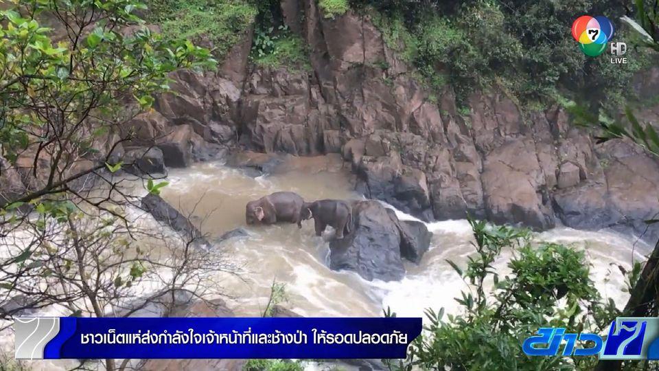 ชาวเน็ตแห่ส่งกำลังใจให้เจ้าหน้าที่และช้าง ให้รอดปลอดภัย