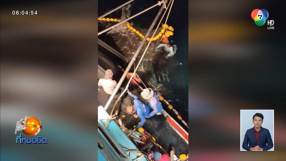ชื่นชม ไต้ก๋งเรือประมงกระบี่ปล่อยฉลามวาฬยักษ์ติดอวน คืนสู่ธรรมชาติ