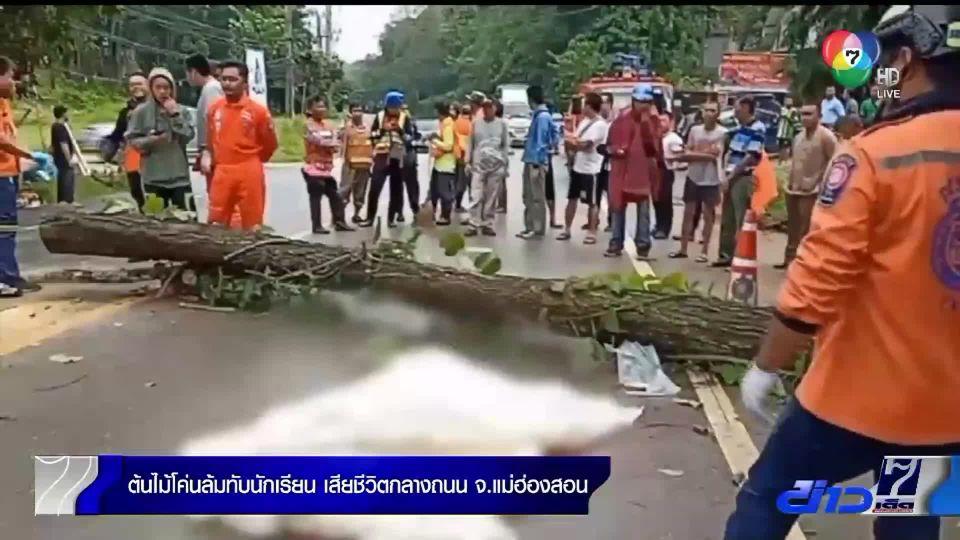 ต้นไม้โค่นล้มทับนักเรียนเสียชีวิตกลางถนน จ.แม่ฮ่องสอน