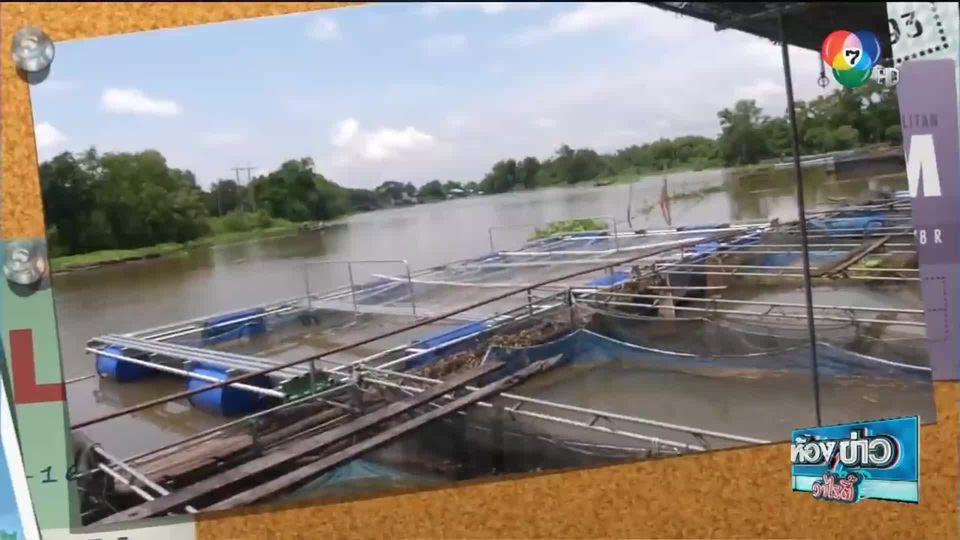 ข่าวเกษตร : เทคนิคเลี้ยงปลาแรดในกระชังแบบลดต้นทุน