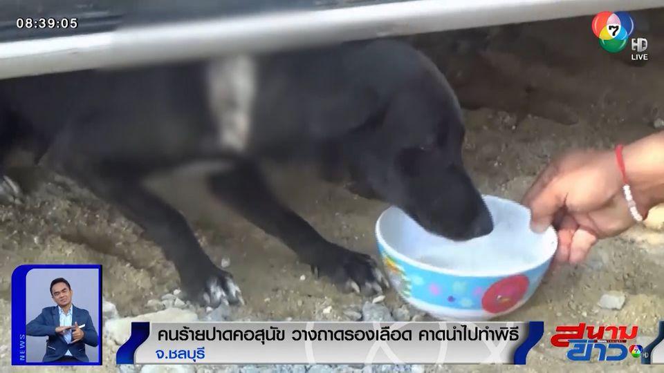 ภาพเป็นข่าว : คนร้ายปาดคอสุนัข วางถาดรองเลือด เชื่อนำไปทำพิธี จ.ชลบุรี