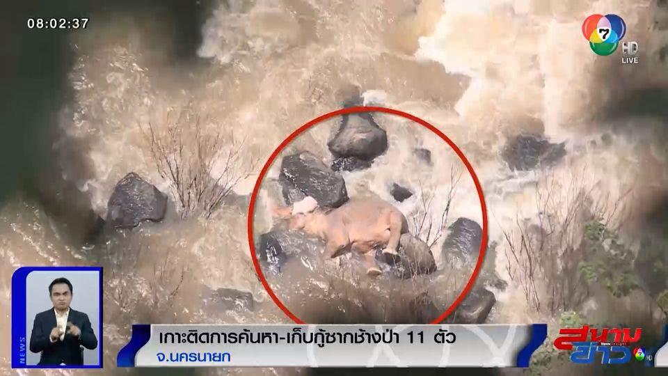 รายงานพิเศษ : เกาะติดการค้นหา-เก็บกู้ซากช้างป่า 11 ตัว จ.นครนายก