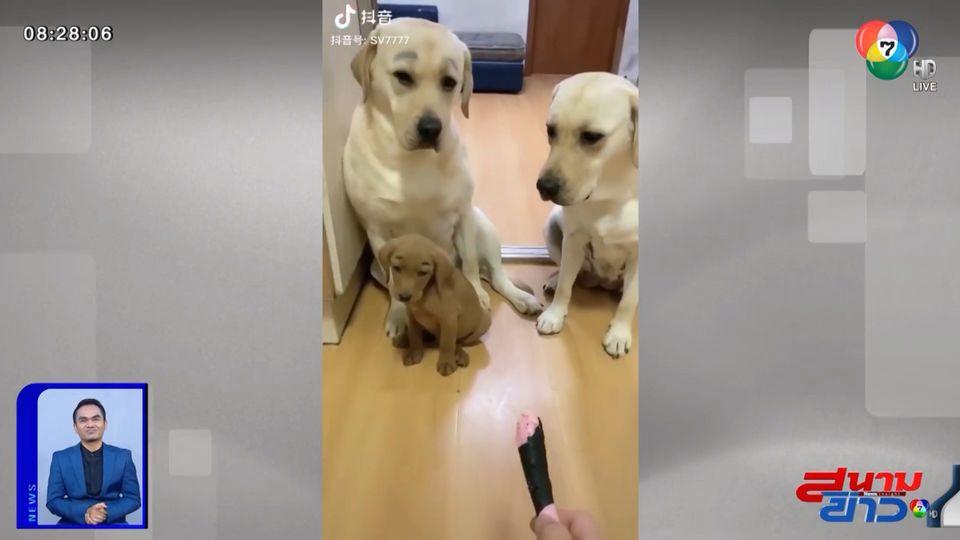 ภาพเป็นข่าว : ทำเอายิ้ม! สุนัขแสนรู้ไม่ยอมรับผิด หลังกัดข้าวของจนพังเละ