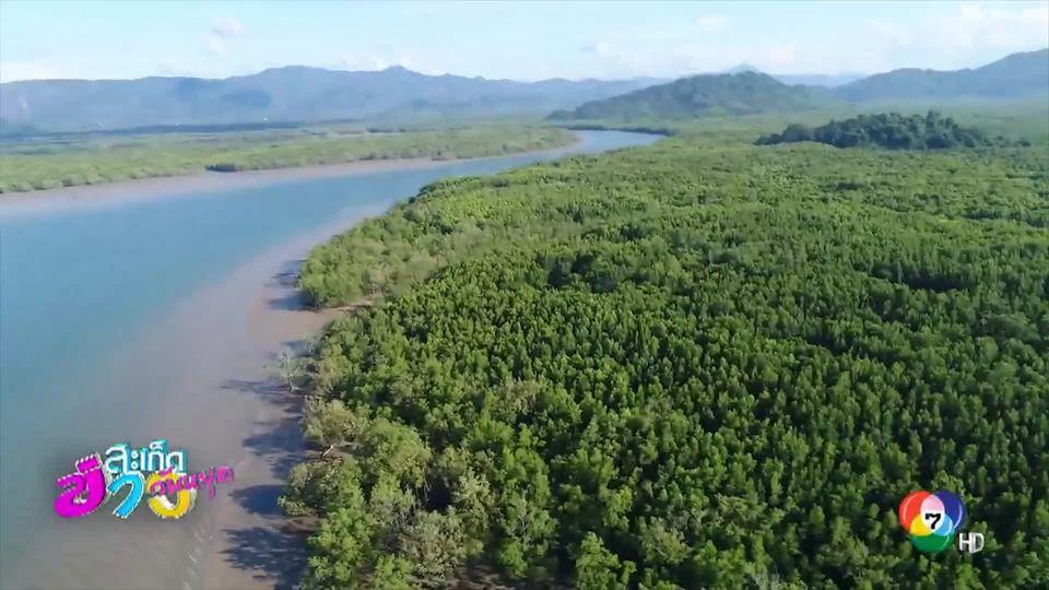 เหยี่ยวข่าว Unseen : โกงกาง 200 ปี อุทยานแห่งชาติหมู่เกาะระนอง