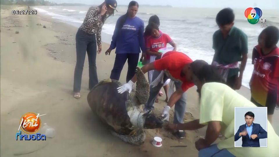 พบซากเต่าตนุยักษ์ เกยชายหาด จ.ชุมพร คาดตายเพราะกินขยะพลาสติก