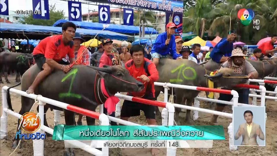 หนึ่งเดียวในโลก สีสันประเพณีวิ่งควาย เคียงคู่วิถีคนชลบุรี ครั้งที่ 148