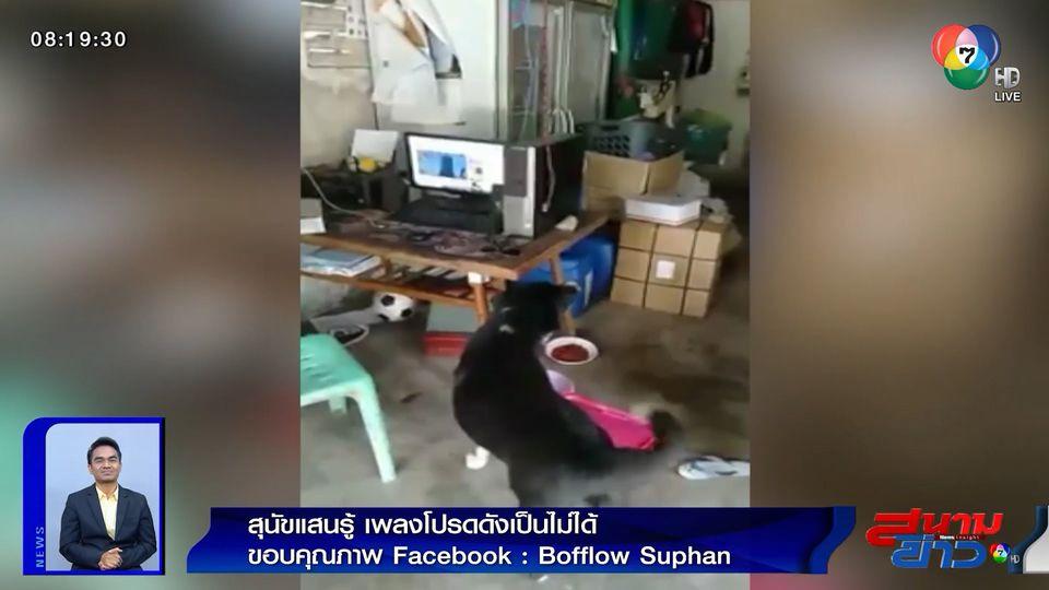 ภาพเป็นข่าว : สุนัขแสนรู้ เพลงโปรดดังเป็นไม่ได้ ต้องร้องตาม