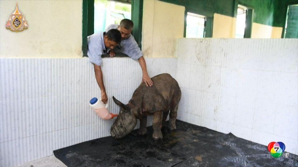 เจ้าหน้าที่เร่งช่วยสัตว์ป่าจากน้ำท่วมหนัก ในอินเดีย