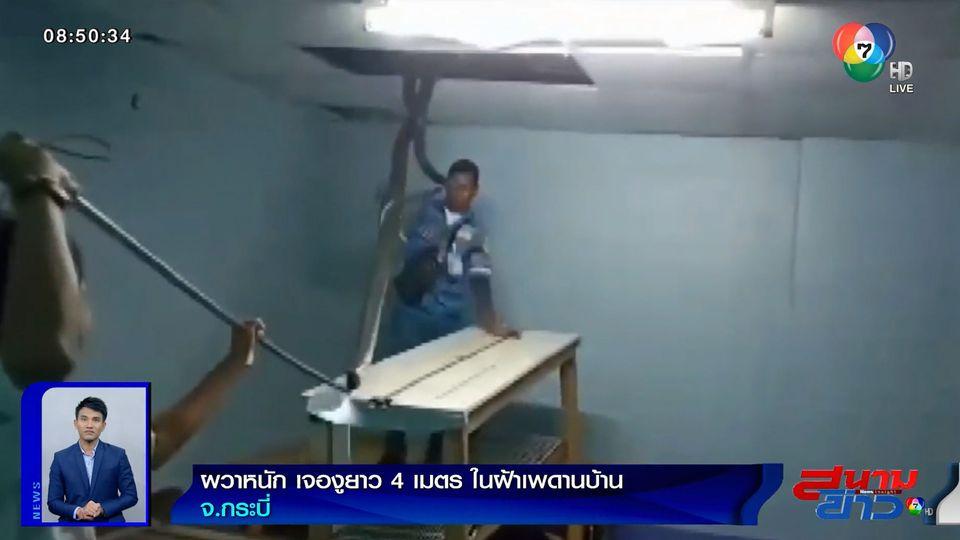 ภาพเป็นข่าว : ผวาหนัก! เจองูยาว 4 เมตร ในฝ้าเพดานบ้านกลางดึก จ.กระบี่