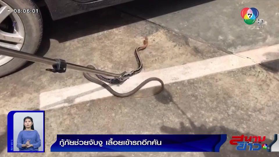 ภาพเป็นข่าว : พลเมืองดีเห็นงูเลื้อยขึ้นรถแม่ค้าไส้กรอก รีบแจ้งกู้ภัยมาช่วย