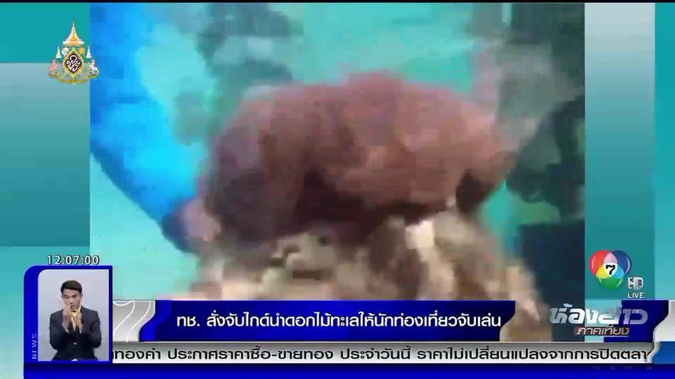 ทช.สั่งจับไกด์ นำดอกไม้ทะเลให้นักท่องเที่ยวจับเล่น อยู่ในบัญชีสัตว์ป่าคุ้มครอง