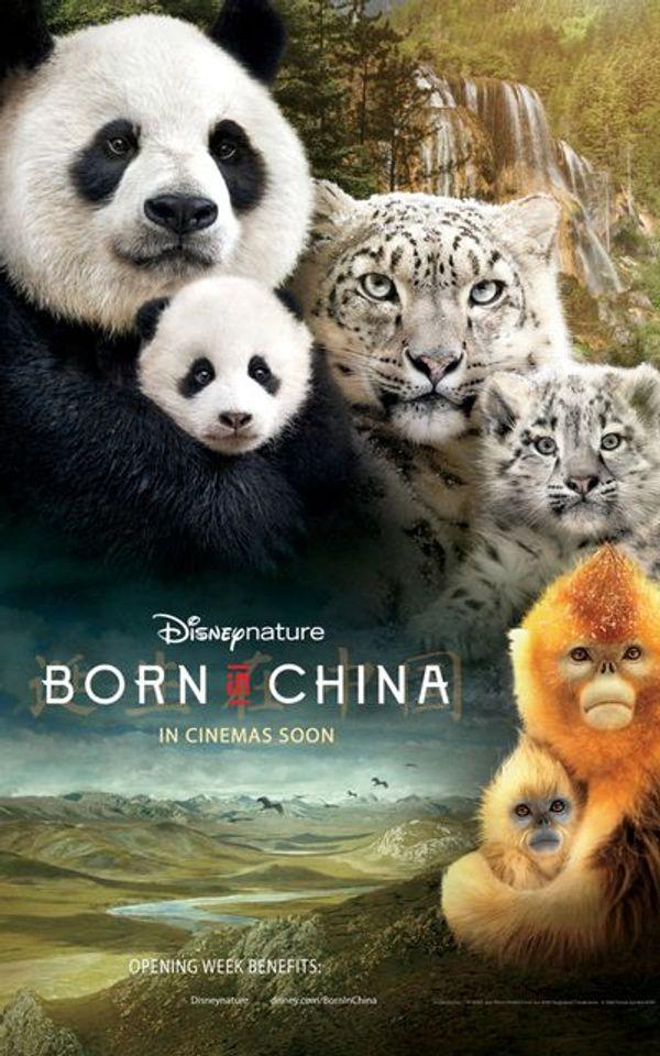 """ภ.ฝรั่ง """"BORN IN CHINA"""""""