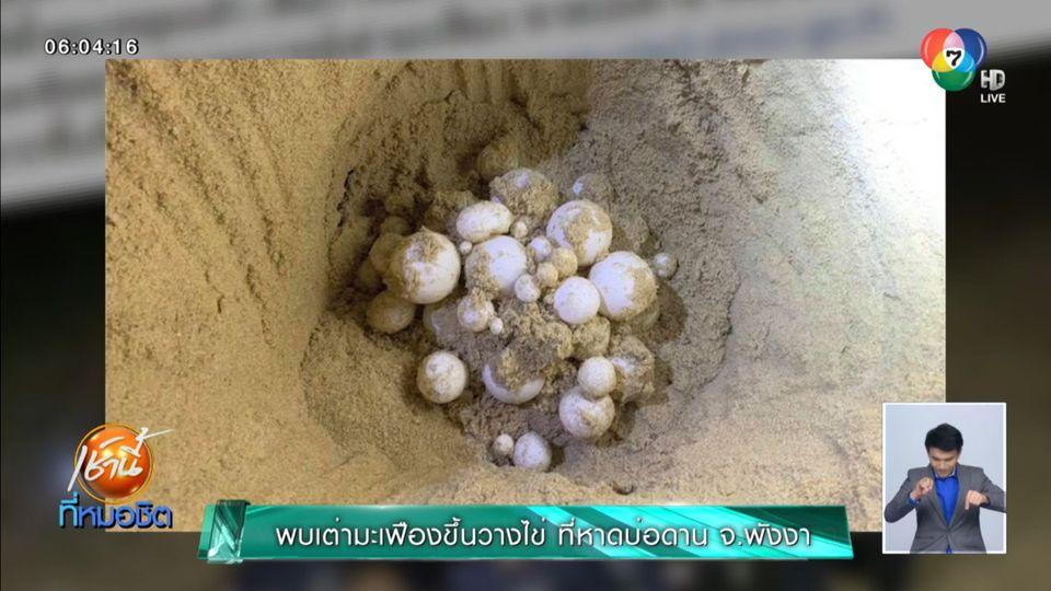 พบเต่ามะเฟืองขึ้นวางไข่ ที่หาดบ่อดาน จ.พังงา