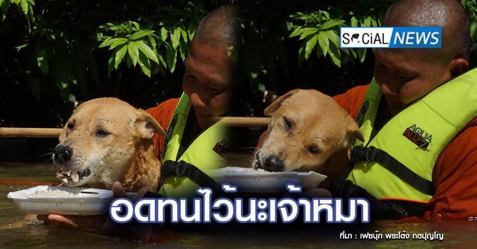 น้ำตาคลอ ภาพพระช่วยป้อนข้าวให้สุนัข ท่ามกลางมวลน้ำท่วมแทบมิดตัว