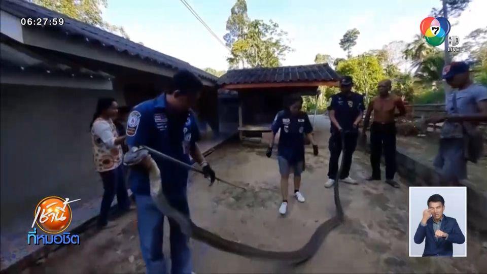 ผวา! งูจงอางตัวใหญ่ยาวกว่า 4 เมตร โผล่กลางห้องครัวขู่ฟ่อ เจ้าของบ้านวิ่งหนีเตลิด