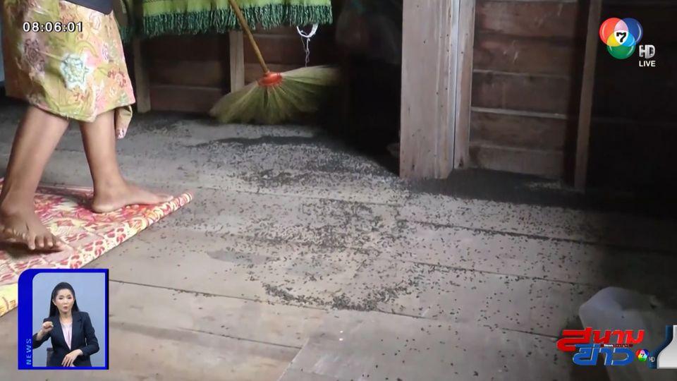 โผล่อีก ฝูงแมลงปีกแข็งบุกยึดบ้านนานกว่า 4 ปี จ.อุทัยธานี