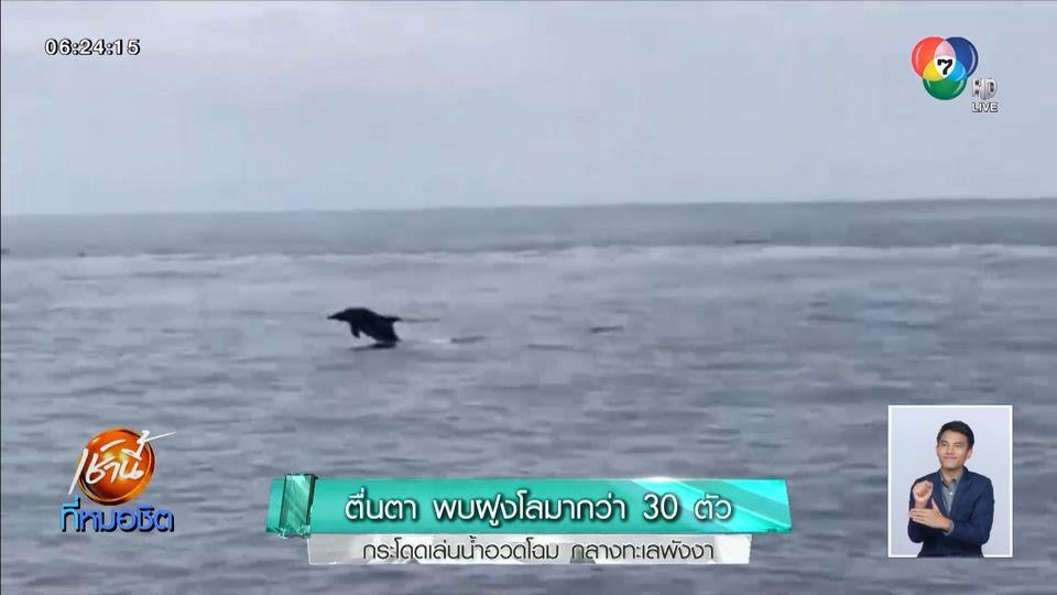 ตื่นตา! พบฝูงโลมากว่า 30 ตัว กระโดดเล่นน้ำอวดโฉมกลางทะเลพังงา