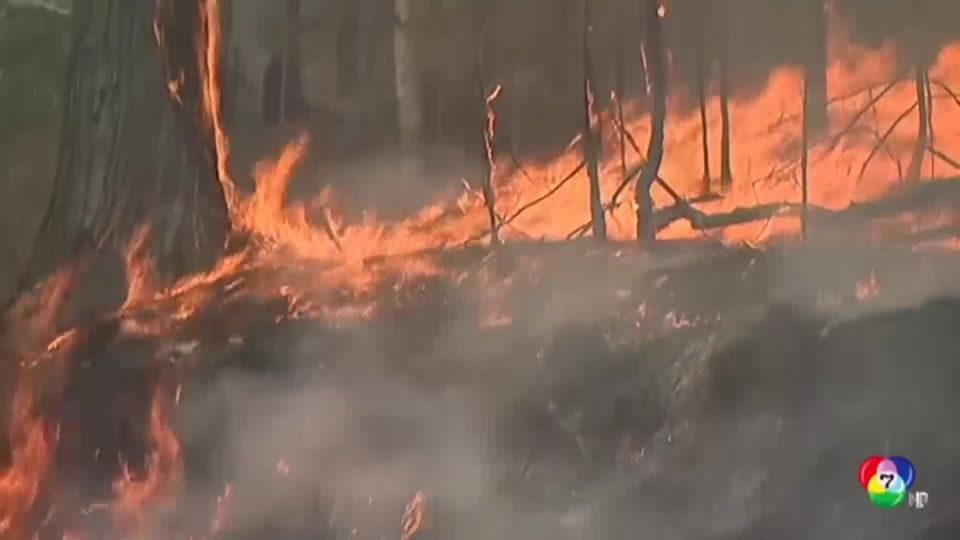 สถานการณ์ไฟป่าในออสเตรเลีย ยังลุกลามในรัฐควีนส์แลนด์-นิวเซาท์เวลส์