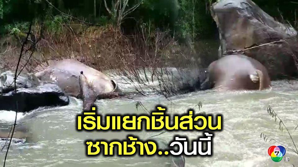 ปฏิการกู้ซากช้างป่า 11 ตัว วันที่ 2