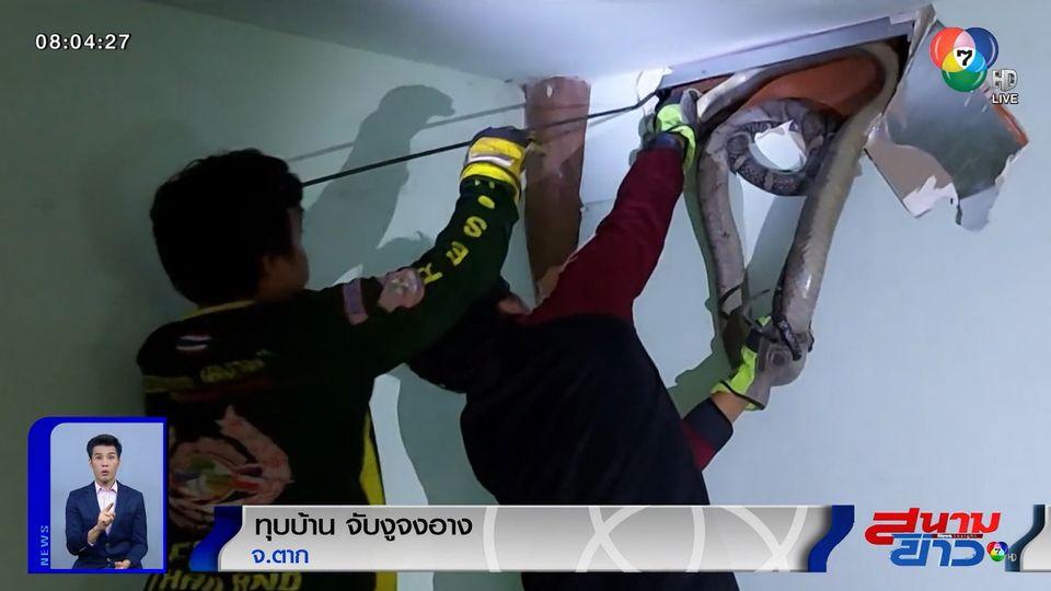 ภาพเป็นข่าว : กู้ภัยเล่นใหญ่! ทุบบ้านจับงูจงอาง จ.ตาก