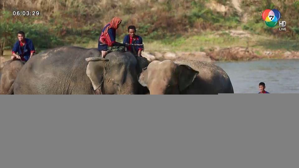 ช้างผ่อนคลาย เล่นน้ำคลายร้อน ณ โครงการคชอาณาจักร จ.สุรินทร์