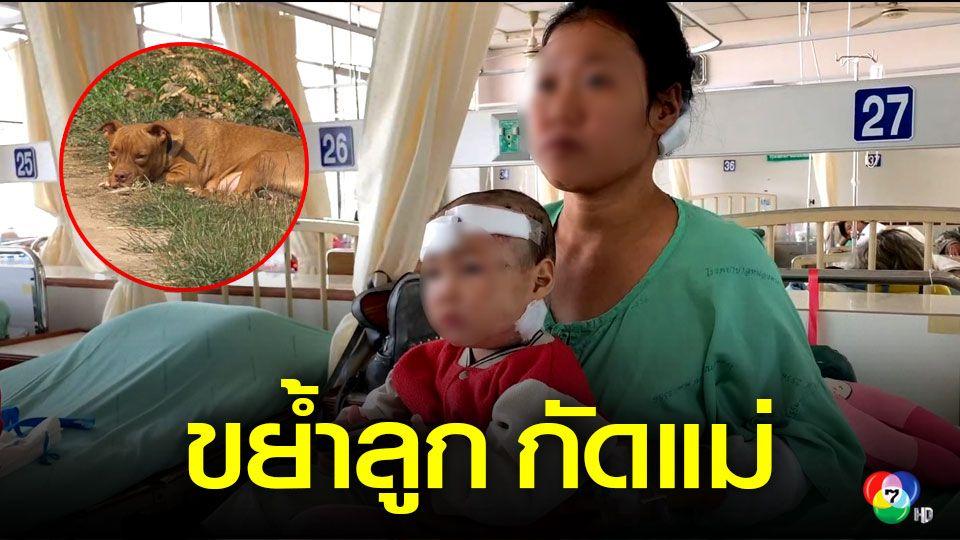 สุนัขขย้ำลูก แม่เข้าช่วยถูกกัดบาดเจ็บสาหัสทั้งคู่