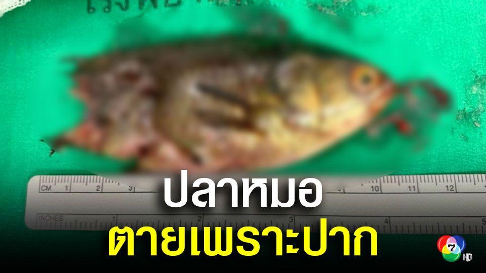 หมอผ่าตัดเอาปลาหมอออกจากปากคนไข้