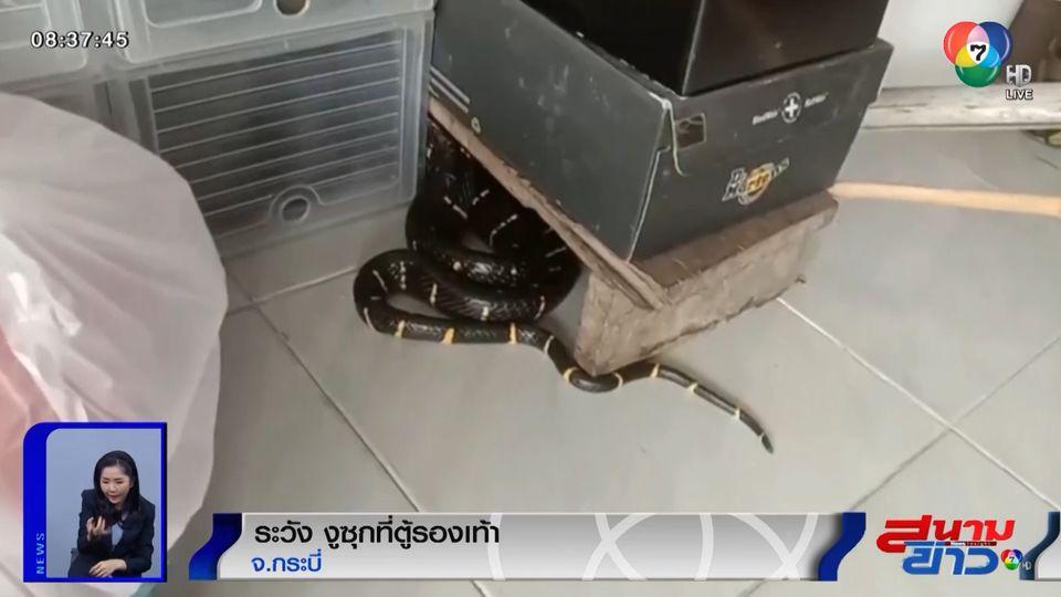 ภาพเป็นข่าว : เตือนระวัง! งูเลื้อยซุกใต้ตู้เก็บรองเท้า จ.กระบี่