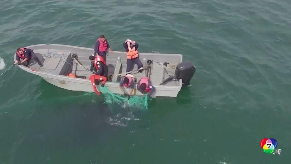 เจ้าหน้าที่ช่วยวาฬหลังค่อมติดตาข่ายประมงในเม็กซิโก