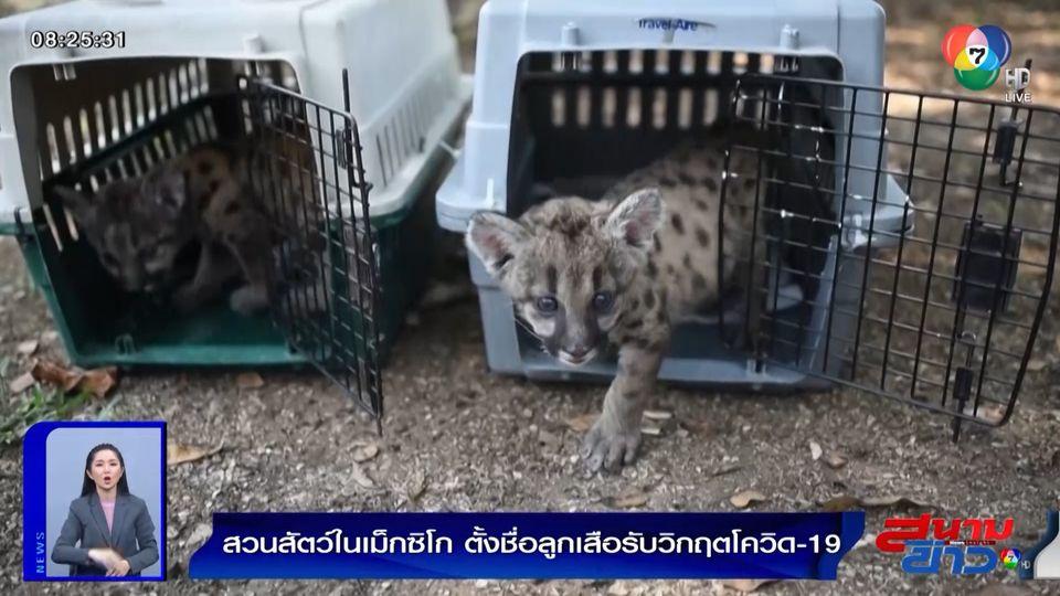 ภาพเป็นข่าว : สวนสัตว์เม็กซิโก ตั้งชื่อลูกเสือพูม่า 2 ตัว สอดคล้องสถานการณ์โควิด-19
