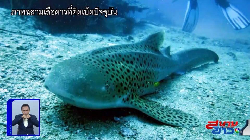 ภาพเป็นข่าว : โซเชียลวอนช่วยตามหาฉลามเสือดาว โดนเบ็ดเกี่ยวปาก