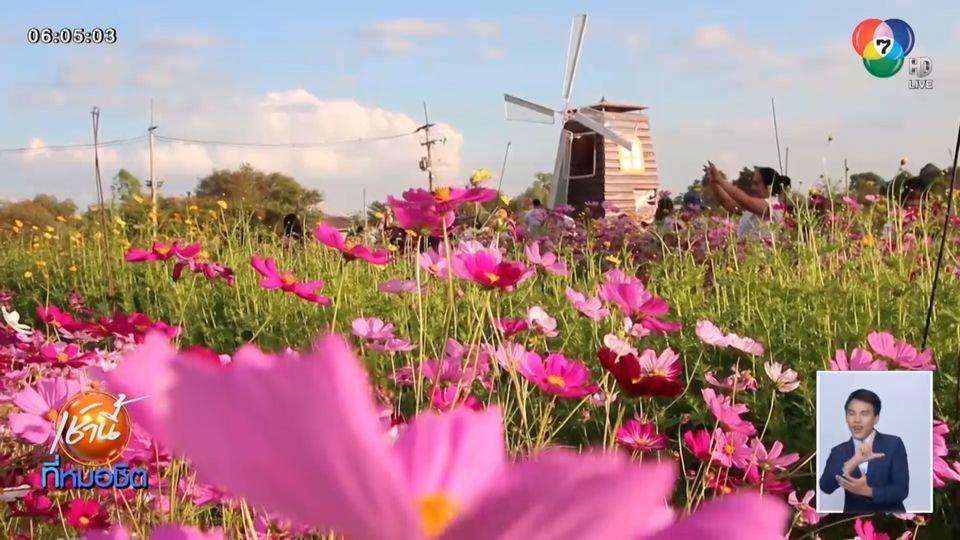 นทท.ร่วมชม-ถ่ายภาพกับทุ่งดอกไม้ ในแปลงเกษตร ม.ขอนแก่น